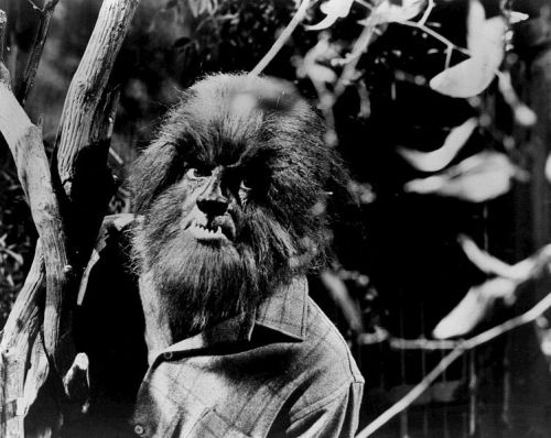 Werewolf from Dark Shadows.