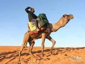 Man on a camel.